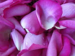 pétales de roses YVA Océan Indien
